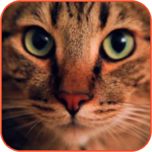 Wonderful Cat Live Wallpaper 個人化 App LOGO-APP試玩