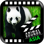 Best Asian Animals Sounds