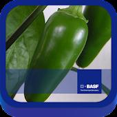 BASF México-Cultivo del Chile