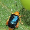 Blue Leaf beetle