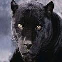 3D Leopard King logo