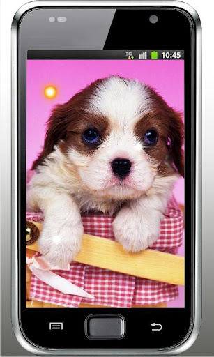 Puppy Top Free Live Wallpaper