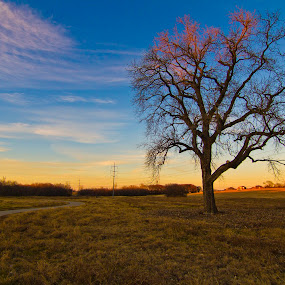 Chispo by Foggy Paipa - Landscapes Prairies, Meadows & Fields ( sky, tree, texas, paisaje, arbol, landscape, plano,  )
