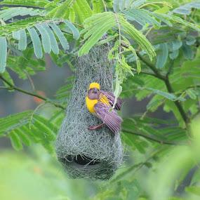 by Anthony Buongpui - Animals Birds