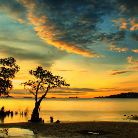twin mangroves by Fajar Vandra - Landscapes Sunsets & Sunrises
