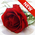 Red Flowers Wallpapers icon