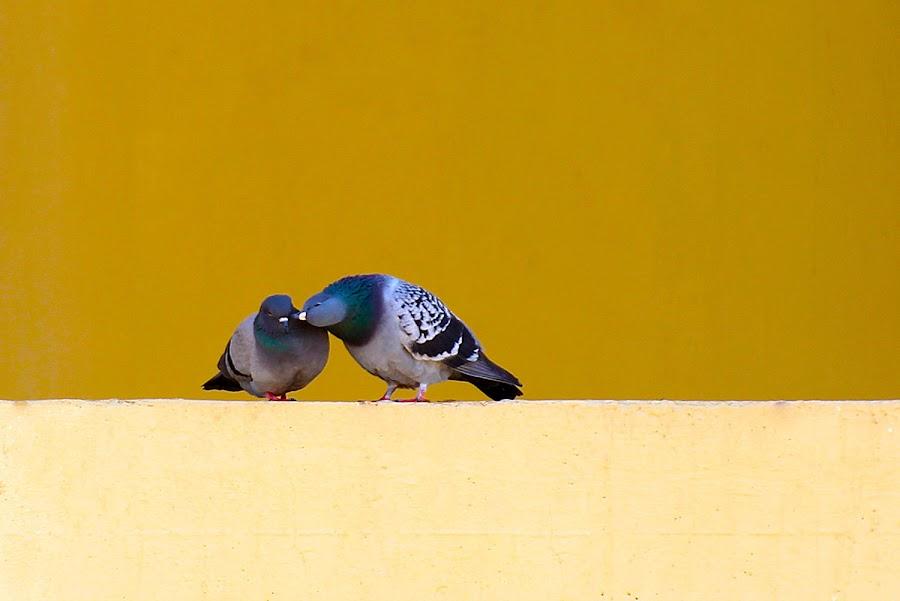 by على القرقورى - Animals Birds ( love, postcard, valentine's day )