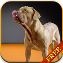 Dogs Licking Screen Wallpaper icon