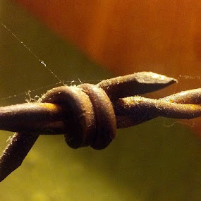 Barbed by Greg G - Uncategorized All Uncategorized ( cobweb, barbed wire, rust, close up,  )