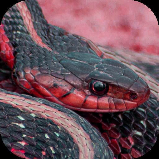 Snake X-Ray Vision Camera