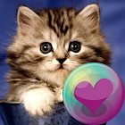 Милые кошки Обои icon