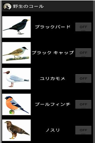 52鳥の鳴き声