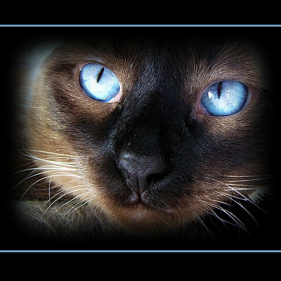 Truffles by Trish Hamme - Animals - Cats Portraits (  )