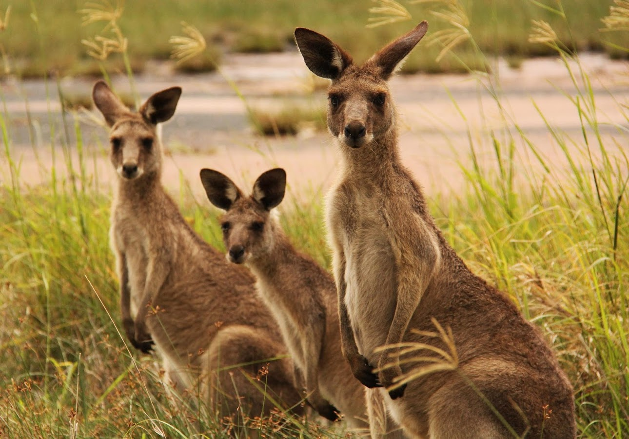 Desktop Backgrounds P Kangaroo Island