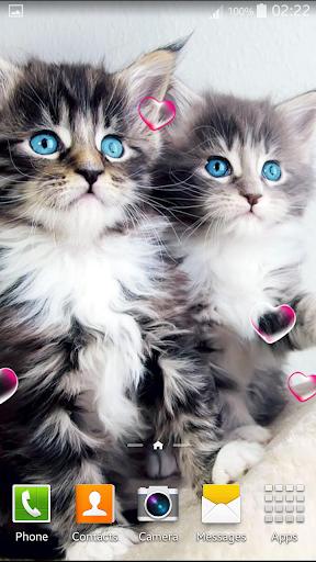 小貓動畫壁紙
