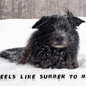 Feels Like Summer To Me by Robert Gallucci - Animals - Dogs Portraits ( winter, snow, funny, humorous, dog )