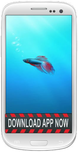 Betta Fish Android Wallpapers