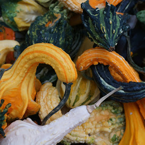 Colorful Gourds by VAM Photography - Nature Up Close Gardens & Produce ( farmers market, nature, union square, gourds, places, nyc,  )