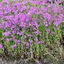 PURPLE TINY FLOWERS