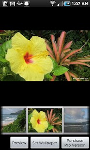 Kauai Flowers screenshot