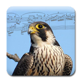 Song of the Birds + Ringtones