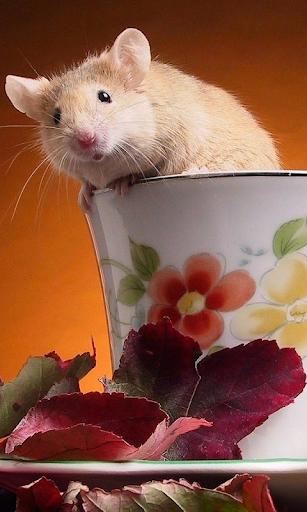 Hamsters Live Wallpaper