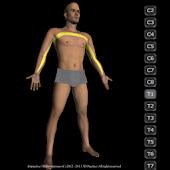 Interactive 3D Dermatomes