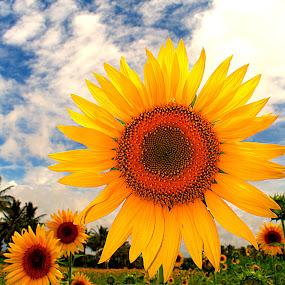 Welcome to Sun by Vijayanand Kandasamy - Flowers Flower Gardens ( sunflower, yellow, flowers, garden, flower, , Hope )
