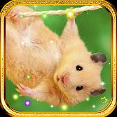 Hamster Pet live wallpaper