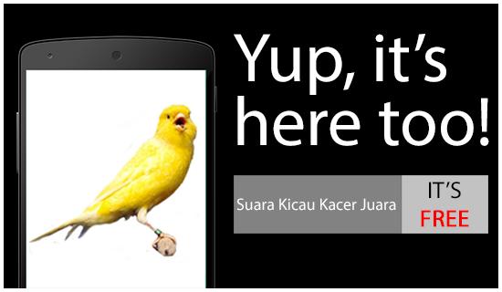 Free download kicau burung kenari gacor