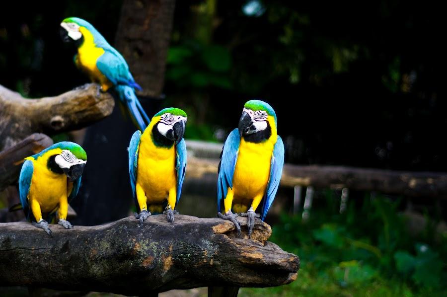 by Linus Koh - Animals Birds