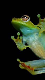 Frog Wallpapers - screenshot thumbnail