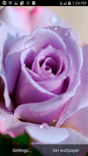 Pink Glitter Rose L Wallpaper