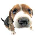 3D Puppy HD Live Wallpaper icon
