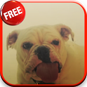 Dog Licking Screen HD LWP icon