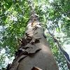 Tree sp.