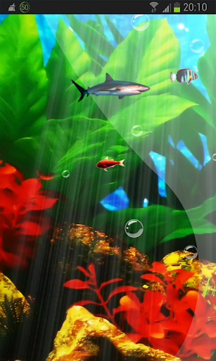 Perfecto Aquarium Real Fish HD