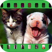 Nonstop Funny Cat & Dog Videos