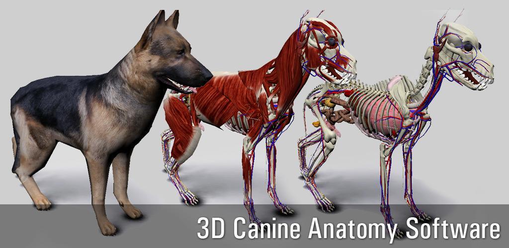 Download 3D Hund Anatomie Apk Neueste Version App Für Android-Geräte