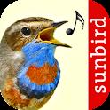 Vogelstimmen Id - Ruf + Gesang icon