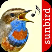Vogelstimmen Id - Ruf + Gesang