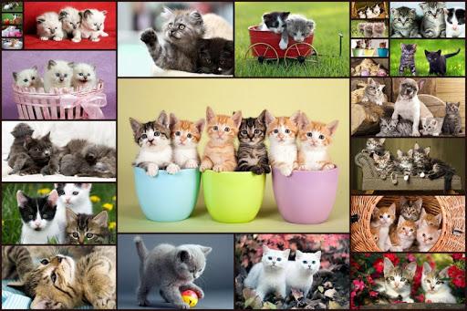 幼童的貓貓拼圖 - Cat puzzles for kids