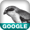 Using Google App Engine logo