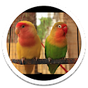 Photo HD Birds Live Wallpaper icon