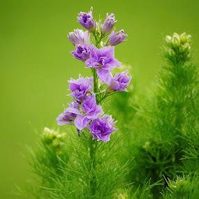 Purple by Bo Chambers - Flowers Single Flower ( plant, purple, growing, alive, flower, gree )