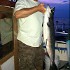 King salmon (Chinook)