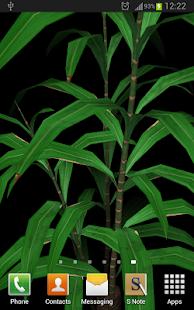 Bamboo Plant Yau 3D Parallax