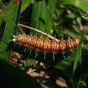 Caterpillar, Lagarta