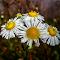 IMG_20140930_122230_tonemapped.jpg