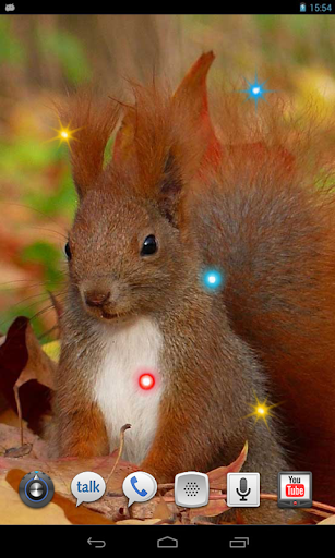 Squirrel Jokes live wallpaper